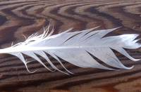 feather and log