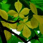 """Young green v/s Old green"" by PrakashKalel"