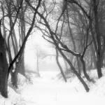 """""""Frozen Creek Bed"""" by Pongo67"""