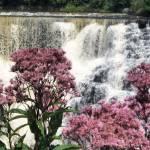 """Flowers & Kakabeka Falls"" by kenjac55"