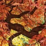 """Autumn Fire Dancer"" by BCImages"