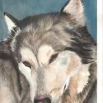 """Dozing Husky"" by ClaraM"