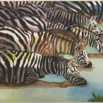 """Drinking Zebras"" by ClaraM"