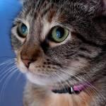 """Cat"" by yuestudio"