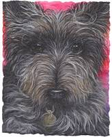 DOG - Cairn Terrier
