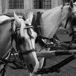 """Horses"" by onurpinar"
