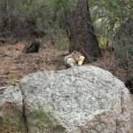 """""""Rockie Mountain Chipmunk"""" by EdmondHogge"""