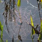 """""""Cobweb"""" by elicay"""