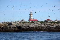 Machias Seal Island Light Maine