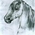 """Horse"" by AlrauneTB"