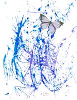 Purple blue butterfly