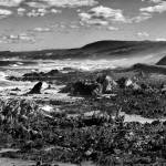 """Seaview_B&W"" by KevinPieDesigns"