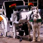 """central park carriage"" by phototes"