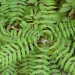"""""""Leaf Mandala"""" by katbesthorn"""