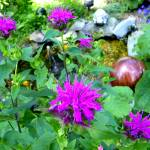 """Bee Balm Garden"" by PASpencer"