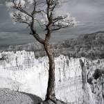 """Lone Tree Canyon - Infrared Landscape"" by miir"