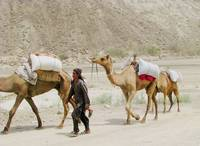 Hingol Camel Train _9479