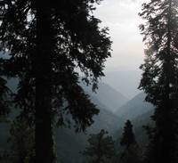 Pines view to Kashmir nathiagali IMG_870603