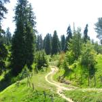 """Nathiagali Meadow Hiking Trail nathiagali_878005"" by davies"