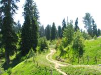 Nathiagali Meadow Hiking Trail nathiagali_878005