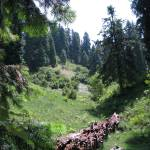 """Nathiagali hiking trail  nathiagali IMG_927611"" by davies"