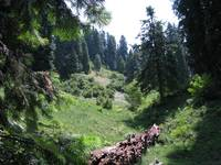 Nathiagali hiking trail  nathiagali IMG_927611