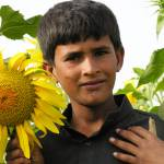 """Boy with Sunflower sindh 2167"" by davies"