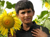Boy with Sunflower sindh 2167