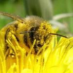 """Lucky Honeybee"" by Barbara_Stock"