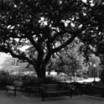 """tree 3 copy 2"" by SolLeonard"