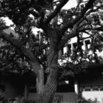 """tree 5"" by SolLeonard"