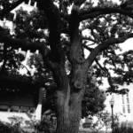 """tree 6"" by SolLeonard"