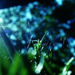 """Spiderweb 687"" by jbass357"