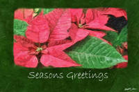 Pink Poinsettias 4 Painterly - Seasons Greetings