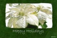White Poinsettias 2 - Happy Holidays