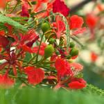 """""""Rojo y Verde"""" by edveguilla"""