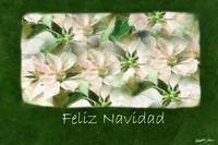 Pink and White Poinsettias 1 Painterly - Feliz Nav