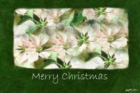 Pink and White Poinsettias 1 Painterly - Merry Chr