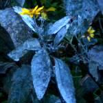 """*Flower"" by patriciaschnepf"