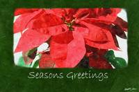 Red Poinsettias 1 - Seasons Greetings