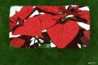 Red Poinsettias 2