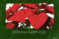 Red Poinsettias 2 - Seasons Greetings