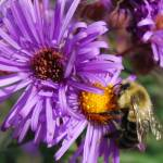 """Just buzzing around"" by joshyb1973"