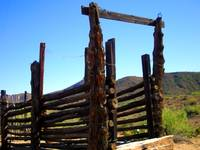 Cattle Chute - Rustic Western Art