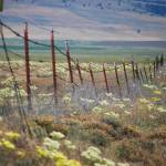 """Prairie Fence"" by cre8ivepix"