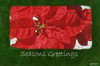 Red Poinsettias 3 - Seasons Greetings