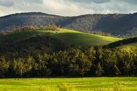 Spring in Yarra Valley
