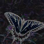 """Swallow Tail Butterfly on a Buterfly Bush Chrome"" by faf1967"
