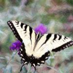 """""""Swallow Tail Butterfly on Buterfly Bush Clr Pencil"""" by faf1967"""