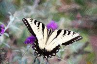 Swallow Tail Butterfly on Buterfly Bush Clr Pencil